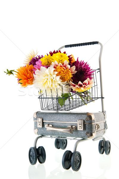 букет Vintage чемодан изолированный белый цветы Сток-фото © ivonnewierink