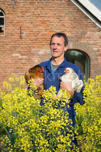 Farmer with chickens Stock photo © ivonnewierink