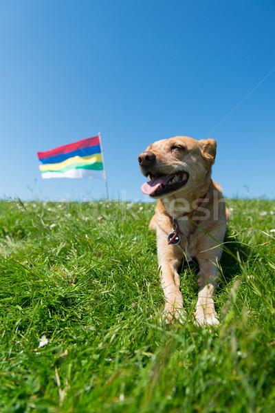 Hond leggen gras nederlands eiland bruin Stockfoto © ivonnewierink
