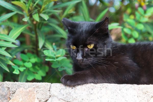 Geçit kedi açık siyah duvar Stok fotoğraf © ivonnewierink