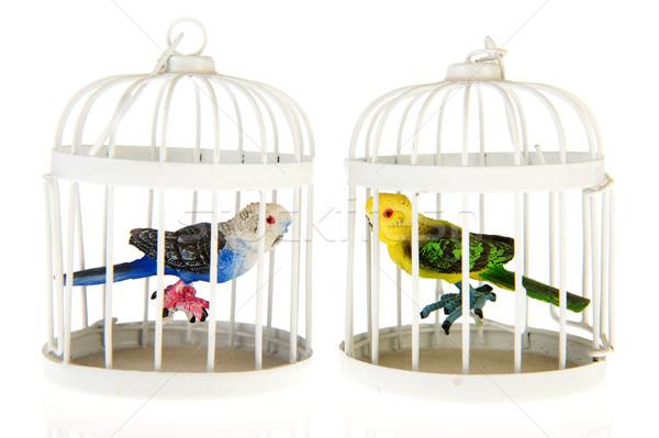 Miniature parrots in cages Stock photo © ivonnewierink