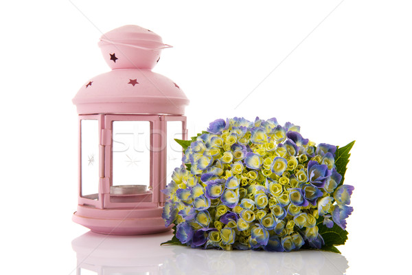 Blue Hydrangea and pink lantern Stock photo © ivonnewierink
