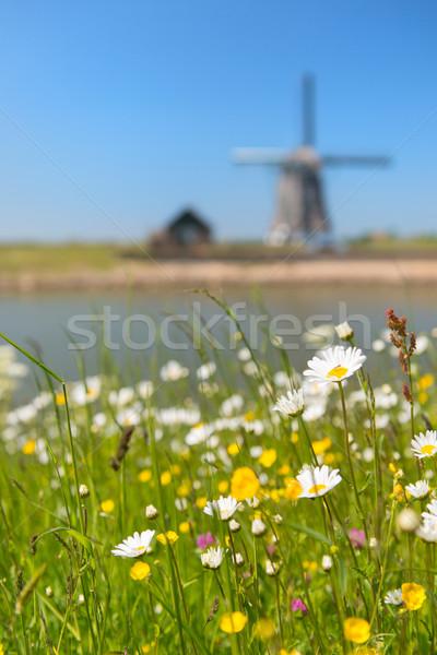 Windmill at Dutch island Texel Stock photo © ivonnewierink
