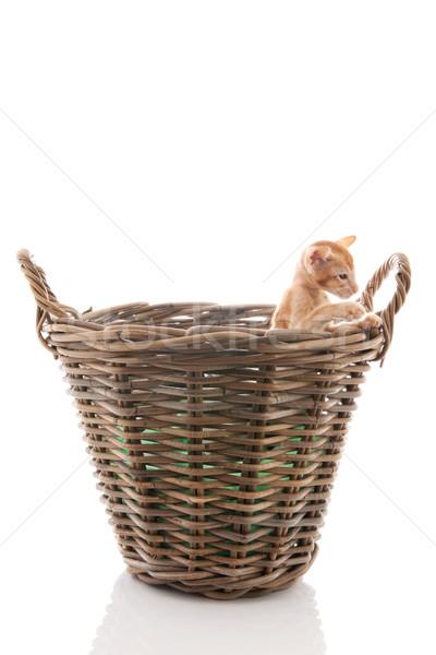 мало котенка корзины красный изолированный белый Сток-фото © ivonnewierink