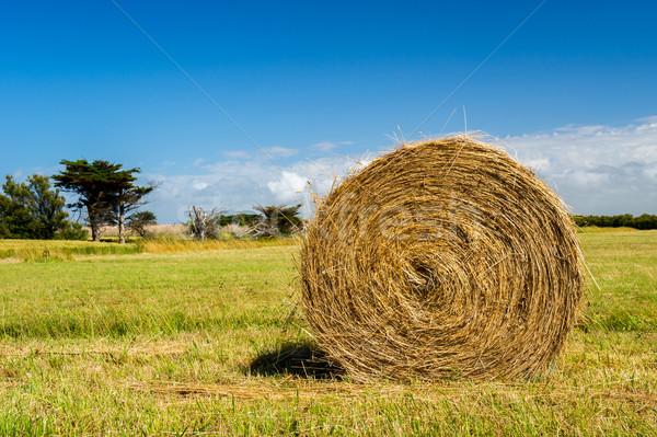 Fardo feno agricultura paisagem céu Foto stock © ivonnewierink