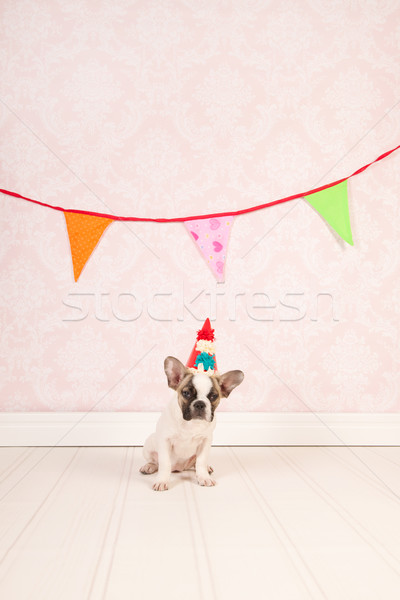Birthday doggy Stock photo © ivonnewierink