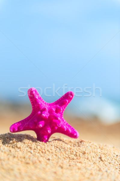 Rozgwiazda plaży różowy stałego lata podróży Zdjęcia stock © ivonnewierink