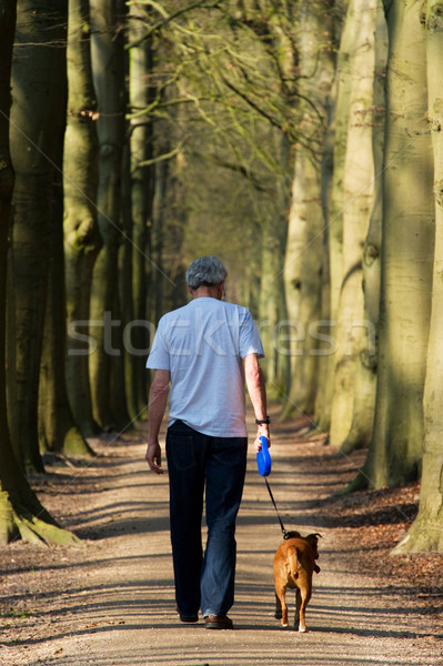 Walking the dog in forest Stock photo © ivonnewierink