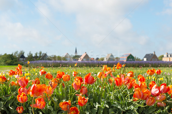 Village Den Hoorn at Dutch Texel Stock photo © ivonnewierink