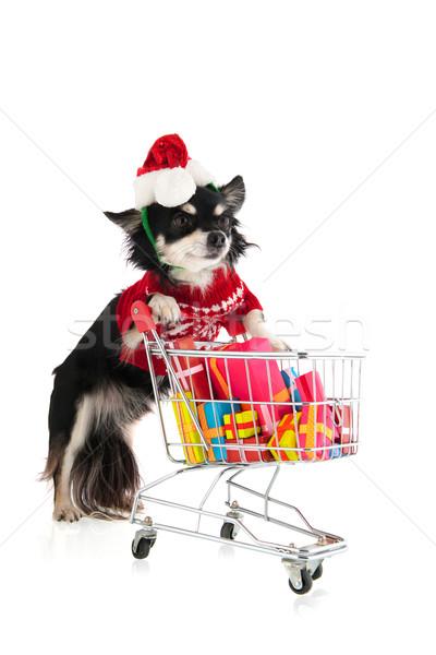 Foto stock: Cão · compras · natal · carrinho · de · compras · muitos · colorido