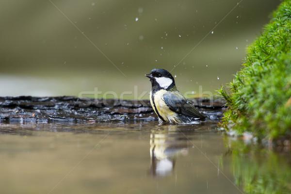 Тит ванны воды природы Сток-фото © ivonnewierink