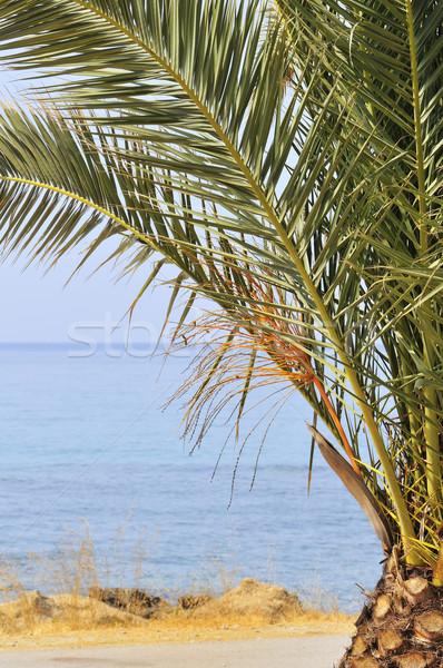 Palmeira tropical costa água palma oceano Foto stock © ivonnewierink