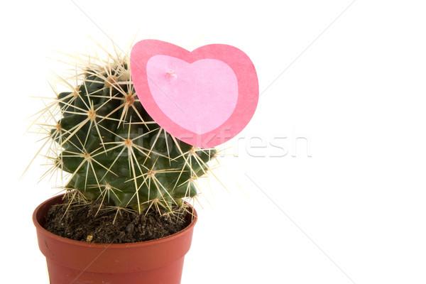 Prickly love Stock photo © ivonnewierink