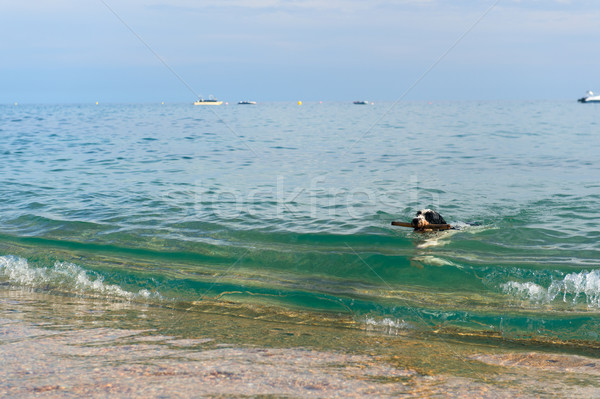 Dog at the beach Stock photo © ivonnewierink