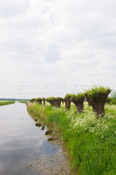 Rij koe peterselie nederlands landschap voorjaar Stockfoto © ivonnewierink