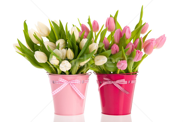 Pink and white tulips in buckets Stock photo © ivonnewierink