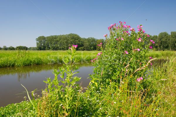 розовый волосатый воды горизонте Сток-фото © ivonnewierink