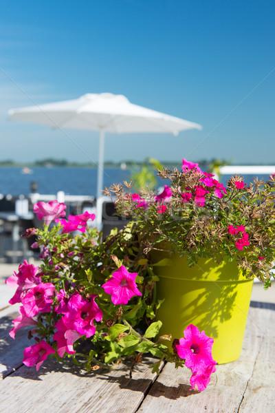 Pink Petunia flowers Stock photo © ivonnewierink