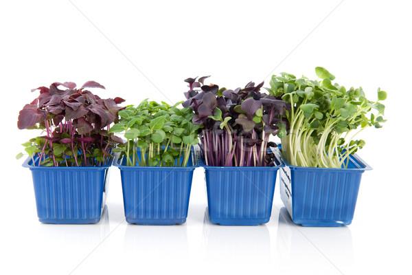 Fresh garden cress Stock photo © ivonnewierink