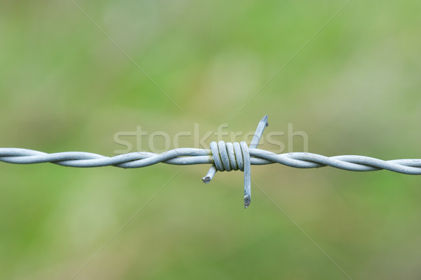 Barbed wire Stock photo © ivonnewierink