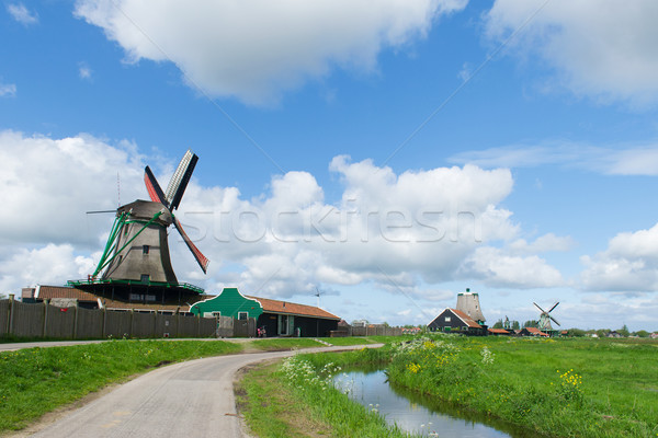 Holandês flores silvestres flores água nuvens paisagem Foto stock © ivonnewierink
