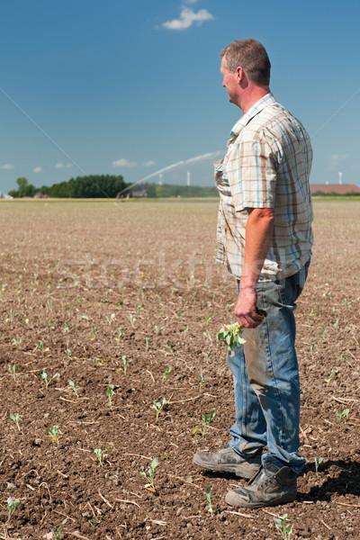 Landwirt arbeiten Felder Freien Landwirtschaft Porträt Stock foto © ivonnewierink