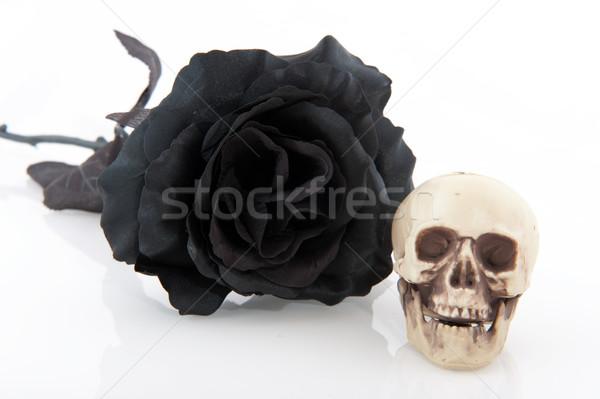 Halloween black rose Stock photo © ivonnewierink