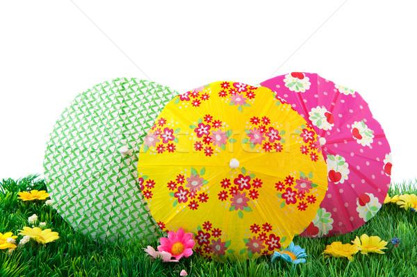 Renkli çim tropikal çiçekler yeşil renkler Stok fotoğraf © ivonnewierink