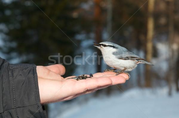 Yeme tohumları göz doğa kuş hayvanlar Stok fotoğraf © ivz