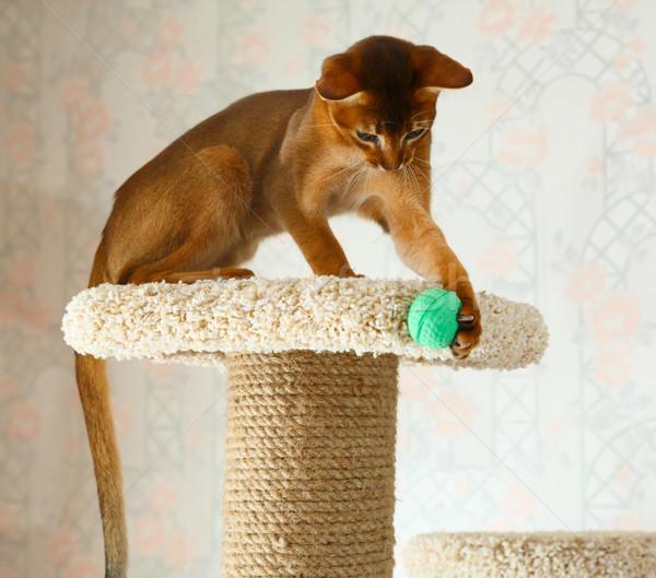 Kedi yavrusu genç kedi ağaç mobilya doğa Stok fotoğraf © ivz