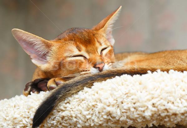Kedi yavrusu uyku genç kedi turuncu kırmızı Stok fotoğraf © ivz
