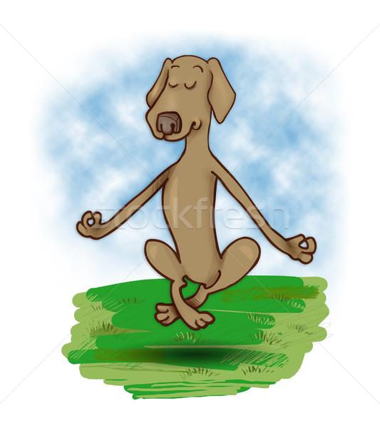 levitating dog Stock photo © izakowski