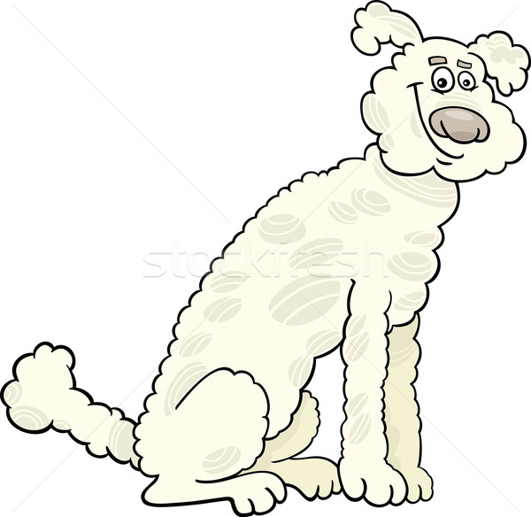 Caniche chien cartoon illustration cute blanche Photo stock © izakowski