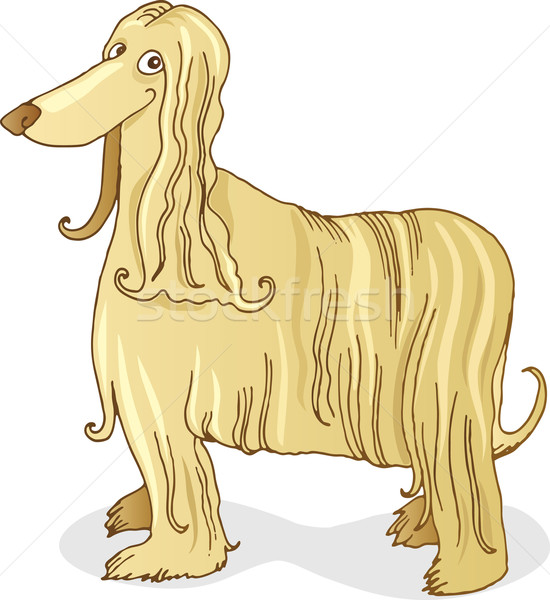 Afghan hound dog Stock photo © izakowski