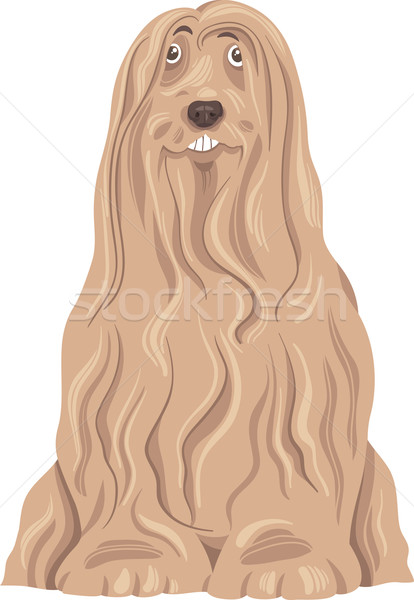 bearded collie dog cartoon Stock photo © izakowski