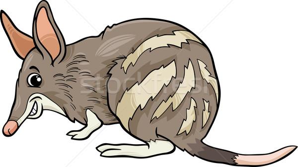 bandicoot animal cartoon illustration Stock photo © izakowski