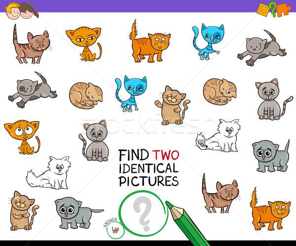 Bulmak iki aynı kedi yavrusu resimleri oyun Stok fotoğraf © izakowski