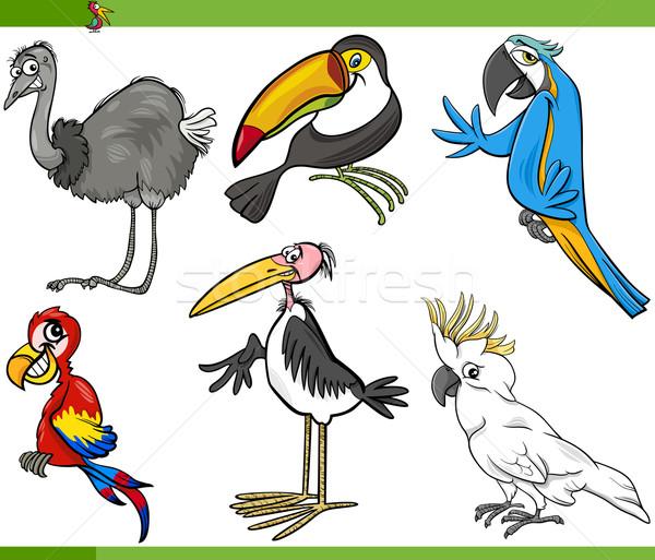 Stockfoto: Vogels · cartoon · ingesteld · illustratie · grappig · exotisch