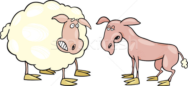 Frightened sheep and shaved one Stock photo © izakowski