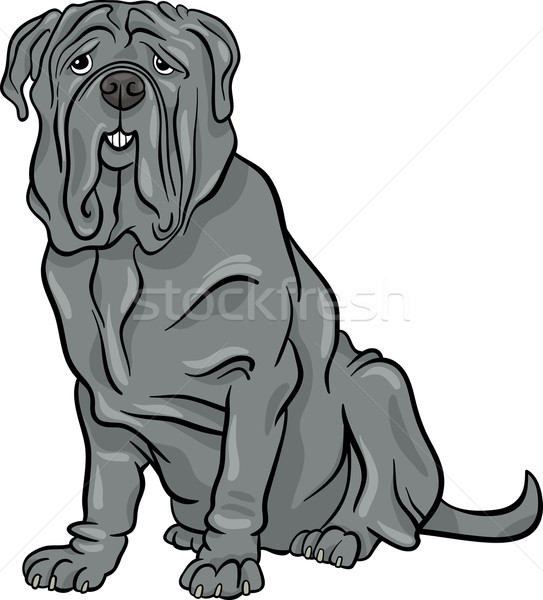 neapolitan mastiff dog cartoon illustration Stock photo © izakowski