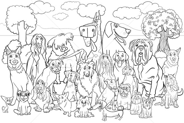 purebred dogs coloring book Stock photo © izakowski