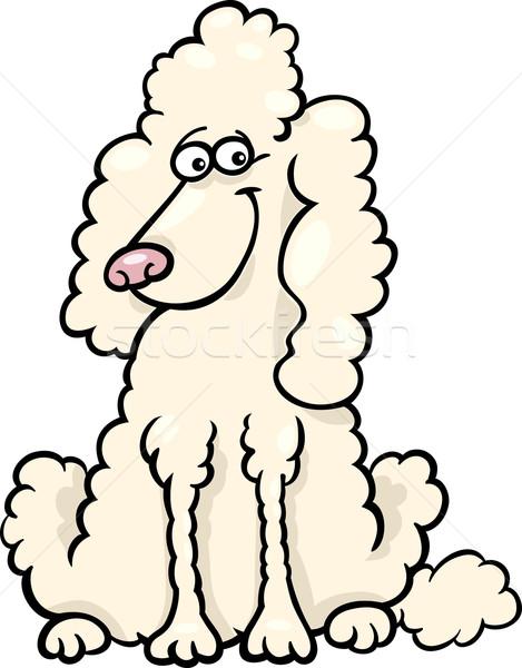 poodle dog cartoon illustration Stock photo © izakowski