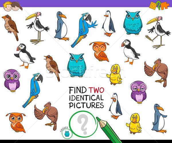 Encontrar dois pássaro fotos jogo Foto stock © izakowski