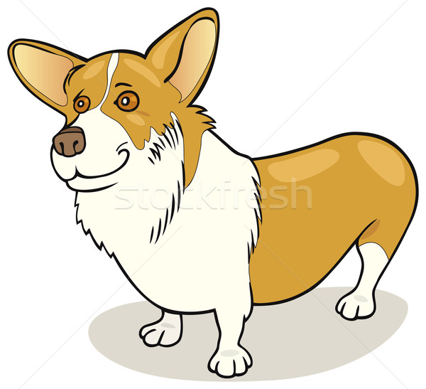 Dog breeds: Pembroke Welsh Corgi Stock photo © izakowski