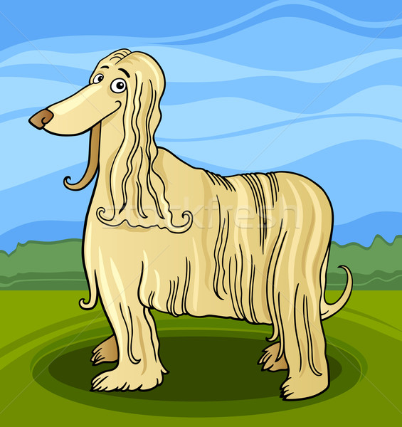 cartoon afghan hound dog Stock photo © izakowski