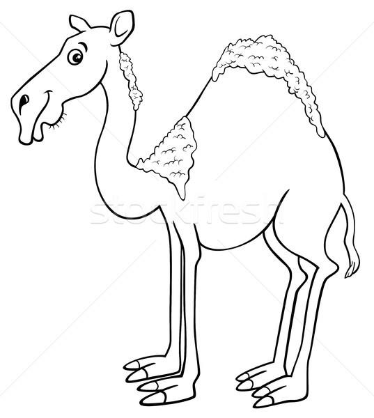dromedary camel cartoon animal character Stock photo © izakowski