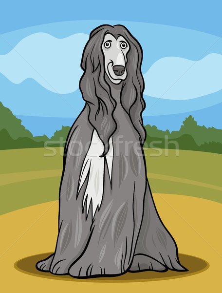 afghan hound dog cartoon illustration Stock photo © izakowski