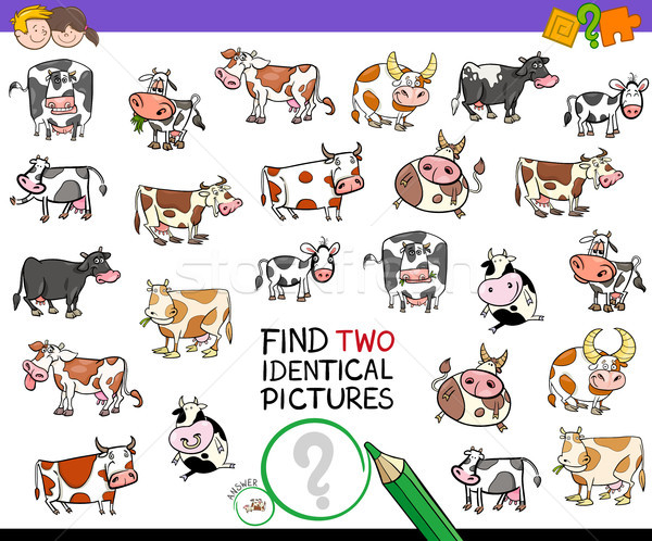 find two identical cows educational activity Stock photo © izakowski