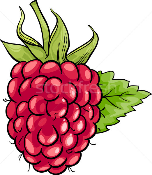 Framboise fruits cartoon illustration alimentaire Photo stock © izakowski
