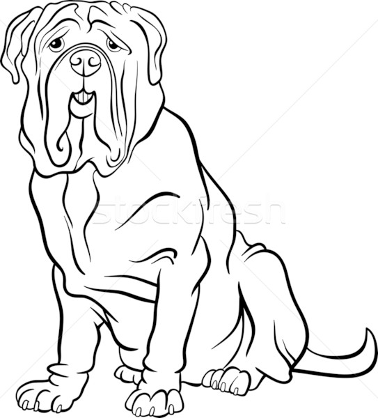 neapolitan mastiff dog cartoon for coloring Stock photo © izakowski